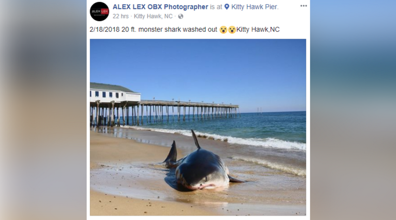 No A 20 Foot Shark Did Not Wash Up On An Obx Beach